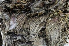 Tekstury vegetal włókno na bagażniku palma Obrazy Royalty Free