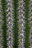 Tekstury w kaktusach Kaktus w Tucson Arizona Obrazy Royalty Free