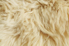 tekstury wełna Obraz Royalty Free