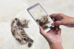 Teléfono móvil que tira dormir del gatito Fotos de archivo libres de regalías