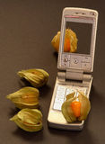 Teléfono móvil y Physalis Foto de archivo libre de regalías
