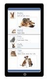 Teléfono social del animal doméstico medios foto de archivo libre de regalías