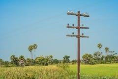 Telégrafo postes Fotografía de archivo libre de regalías