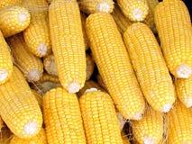 Tel Aviv kukurydzani cobs 2012 Zdjęcia Stock