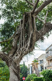 Tel Aviv nature Stock Photo