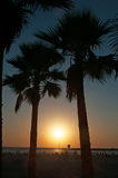 Tel Aviv, Yafo, Israel, Middle East, beach, Mediterranean Sea, palm, trees, sunset, summer. View of Mediterranean Sea and palms on the beach at sunset on August stock images