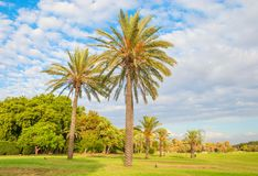 Tel Aviv. Yarkon Park with lawns and palm trees in Tel Aviv stock photo