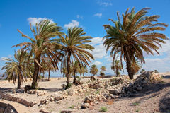 Tel Megiddo National park - Israel Royalty Free Stock Photo