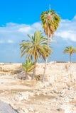 Tel Megiddo ruins Stock Photos