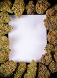 Tela in bianco incorniciata dalla st indica e sativa secca dei germogli della cannabis, Fotografia Stock