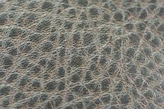 Tela da pele do jacaré Imagem de Stock