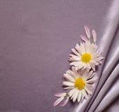Tela de seda con las margaritas Fotografía de archivo