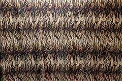 Tela del modelo del tigre del primer, en anaranjado marrón y poner crema negros Fotografía de archivo