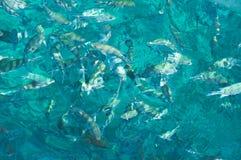 Tela di canapa del AquaMarine Fotografia Stock Libera da Diritti