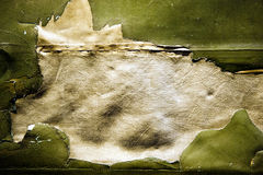 Tela verde oliva granulare Immagine Stock