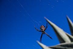 Telaraña al aire libre de la araña Imágenes de archivo libres de regalías