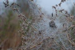 Telaraña con descensos de rocío en la flor secada Imagenes de archivo