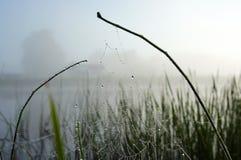 Telaraña con el rocío de la mañana. Imagen de archivo libre de regalías