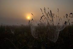 Telaraña con rocío en la mañana de niebla, salida del sol de oro imágenes de archivo libres de regalías