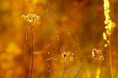 telaraña de la araña en la luz del sol Fotografía de archivo libre de regalías