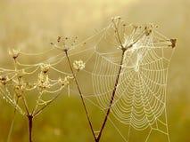 Telaraña de las arañas en un prado en la salida del sol Fotos de archivo