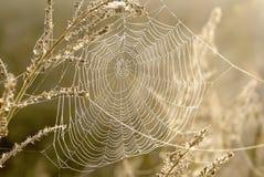 Telaraña de las arañas en un prado en la salida del sol Fotografía de archivo