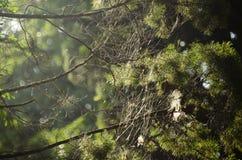 Telaraña en fondo de la naturaleza Imagenes de archivo