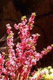 Telaraña en la adoración de la flor Fotografía de archivo libre de regalías