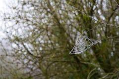 Telaraña en los árboles Foto de archivo libre de regalías