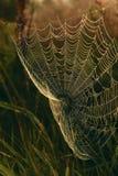 Telaraña en prado de la hierba Imágenes de archivo libres de regalías