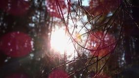 Telaraña en un árbol almacen de metraje de vídeo