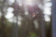 Telaraña, Web de araña Foto de archivo