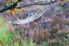 Telaraña, Web de araña Fotografía de archivo