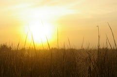 Telarañas en el amanecer Imagen de archivo