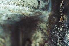 Telarañas en una casa vieja fotos de archivo libres de regalías