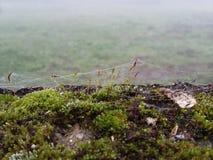 Telarañas en una pared, Foto de archivo libre de regalías
