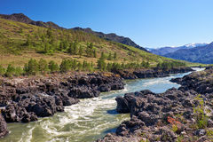 Teldykpen rapids on Altai river Katun near Oroktoi, Russia Stock Photography