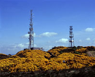 Telecommunications Towers. Surrounded by gorse bushes in bloom Royalty Free Stock Photos