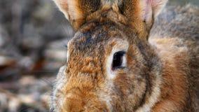 Teledyska nos zwierzęcy królik w górę makro- wideo strzelaniny zbiory