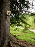Telefon auf einem Baum im Wald Lizenzfreies Stockfoto