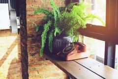 Telefon för gammal stil och växtkruka Arkivfoto