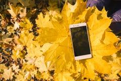 Telefon im Ahornherbstlaub stockbilder