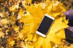 Telefon im Ahornherbstlaub lizenzfreie stockbilder