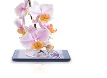 Telefon komórkowy łączy orchidea Zdjęcie Royalty Free