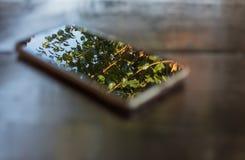 Telefon på trätabellskärmen i konstnärlig fokusbakgrund royaltyfria bilder