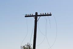 Telefon Pole Stockbild