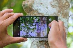 Telefone celular photoghpy Fotografia de Stock Royalty Free