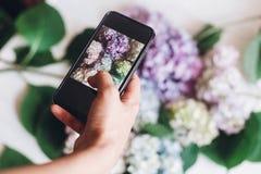 Telefone da terra arrendada da mão e foto da tomada de flores da hortênsia na madeira branca rústica, configuração lisa Índice pa fotos de stock royalty free