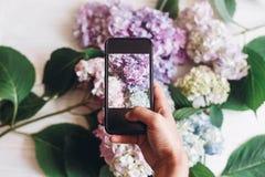 Telefone da terra arrendada da mão e foto da tomada de flores da hortênsia na madeira branca rústica, configuração lisa Índice pa fotos de stock