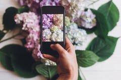 Telefone da terra arrendada da mão e foto da tomada de flores da hortênsia na madeira branca rústica, configuração lisa Índice pa imagem de stock royalty free